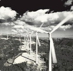New Zealand's wind energy industry